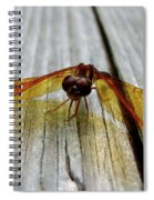 Amber Dragonfly Spiral Notebook