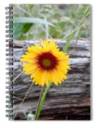 Amber Wheels Blanket Flower Spiral Notebook