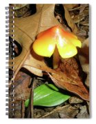Amberina Mushroom - Tiny Jewel In The Forest Spiral Notebook