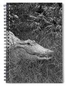 American Alligator 2 Bw Spiral Notebook
