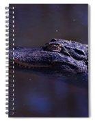 American Alligator Sleeping Spiral Notebook