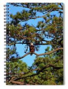 American Bald Eagle Spiral Notebook