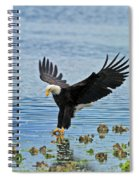 American Bald Eagle Sets Down On Fish Spiral Notebook