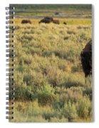 American Bison Spiral Notebook