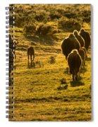 American Bison Sunset March Spiral Notebook