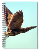 American Bittern Spiral Notebook