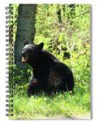 American Black Bear Spiral Notebook