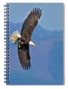 American Blad Eagle On The Wing Spiral Notebook