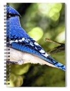 Blue Jay Bokeh Spiral Notebook