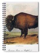American Buffalo, 1846 Spiral Notebook