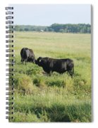 American Cattle Spiral Notebook