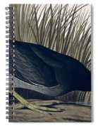 American Coot Spiral Notebook