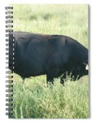 American Cow Spiral Notebook