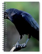 American Crow In Thought Spiral Notebook