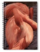 American Flamingo Spiral Notebook