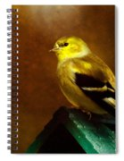 American Gold Finch In Texture Spiral Notebook