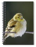 American Gold Finch Spiral Notebook