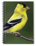 American Golden Finch Spiral Notebook
