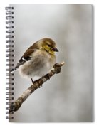 American Golden Finch Winter Plumage 1 Spiral Notebook