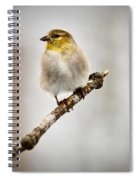 American Golden Finch Winter Plumage 6 Spiral Notebook