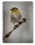 American Golden Finch Winter Plumage Spiral Notebook