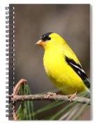 American Goldfinch II Spiral Notebook