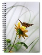 American Lady Butterfly Balancing By The Sea  Spiral Notebook