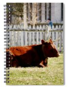 American Milking Devon In Spring Spiral Notebook