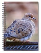 American Mourning Dove Spiral Notebook