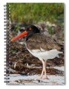 American Oyster Catcher Spiral Notebook
