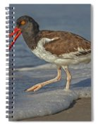 American Oystercatcher Grabs Breakfast Spiral Notebook