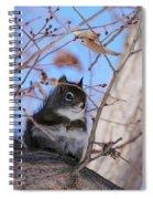 American Red Squirrel Spiral Notebook