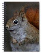 American Red Squirrel Portrait Spiral Notebook
