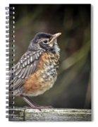 American Robin Fledgling Spiral Notebook