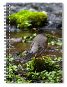 American Robin In Garden Springs Creek Spiral Notebook