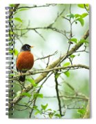 American Robin On Tree Branch Spiral Notebook