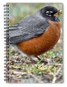 American Robin With Muddy Beak Spiral Notebook