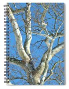 American Sycamore - Platanus Occidentalis Spiral Notebook