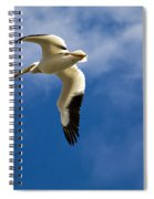 American White Pelican In Flight Spiral Notebook