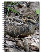 American Woodcock Chick. Spiral Notebook