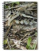 American Woodcock Nesting Spiral Notebook