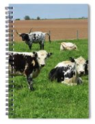 Amish Farm With Spotted Cows And Cattle In A Field Spiral Notebook
