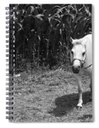 Amish Girl With Her Colt Spiral Notebook
