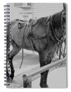Amish Horse Spiral Notebook