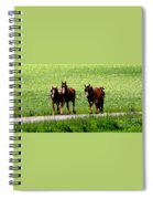 Amish Horse Team Spiral Notebook