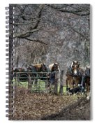 Amish Horses In Harness Spiral Notebook