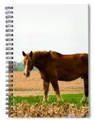 Amish Work Horse Spiral Notebook