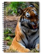 Amur Tiger 3 Spiral Notebook
