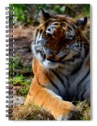 Amur Tiger 4 Spiral Notebook
