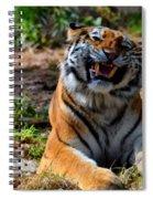 Amur Tiger 7 Spiral Notebook